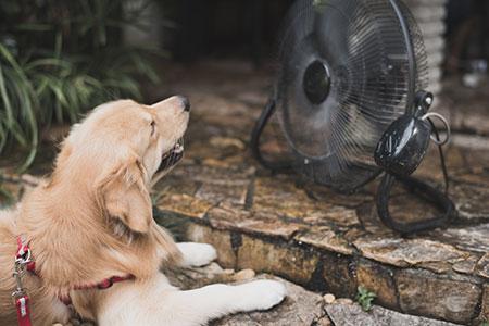 Cachorros sofrem com o calor! Cuidados e atenção! 2