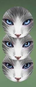 Gatos: por dentro e por fora 9