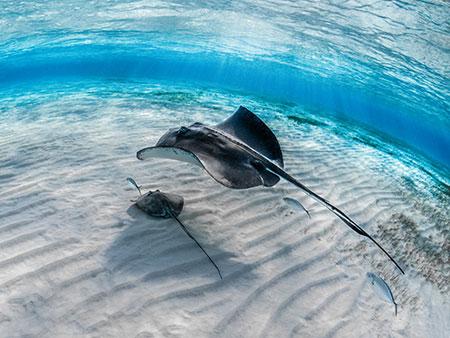 Peixes: Curiosidades que você sempre teve dúvida e nunca perguntou! 3
