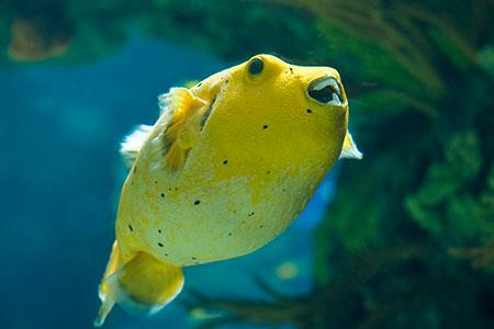 Peixes: Curiosidades que você sempre teve dúvida e nunca perguntou! 5