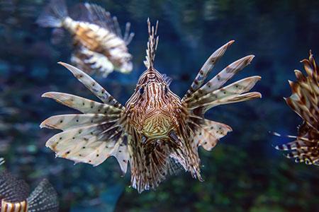 Peixes: Curiosidades que você sempre teve dúvida e nunca perguntou! 4